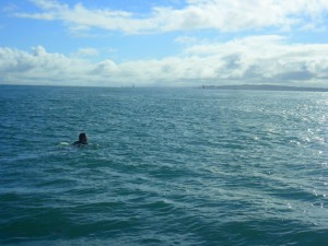 Swimming the Solent for Lewis Mighty